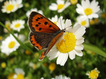 flower and butterfly - image #275925 gratis