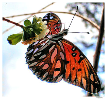 butterfly 19 - Free image #276175
