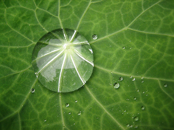 Water drop on leaf - Free image #276315