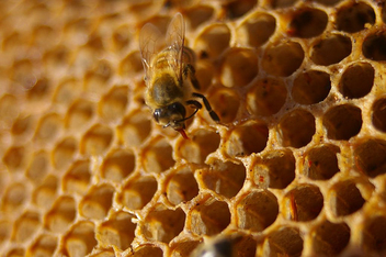 sweet, sweet honey - image #276565 gratis