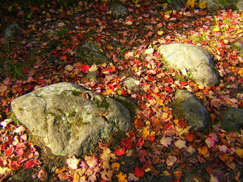 Rock-n-leaves - Free image #276615