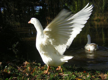 Wings of Love, Joy, Peace and Hope for 2007 - image gratuit #276725