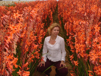 Flower Fields - image #276835 gratis