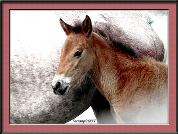 retrat d'un poltre 00 - retrato de un potrillo - portrait of a pony - бесплатный image #277515
