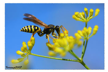 monstres 156 - monstruos - monsters (avispa - vespa - wasp) - бесплатный image #277525