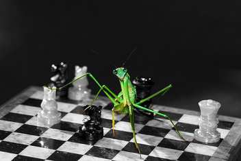 Playing Mantis - Free image #277595