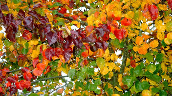 couleurs d'automne / autumn colours - Kostenloses image #277645