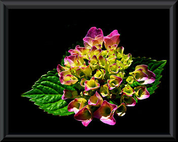 colourful_flower - image #278705 gratis