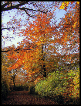 colourful autumn - image #278965 gratis