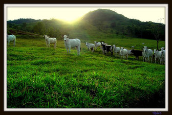 Sunset On The Farm - Kostenloses image #279485