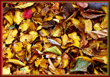 Autumn Ruby Among the Gold - image #280645 gratis