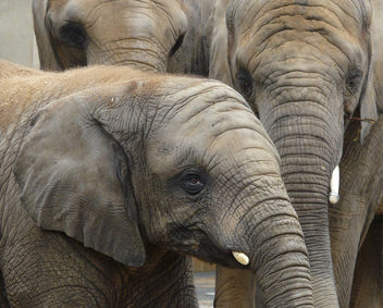 Youngster with trunk family - image #280675 gratis
