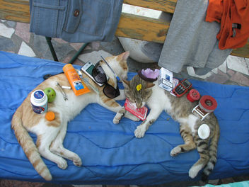 Stuff on cats - Free image #281075