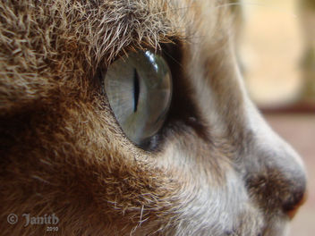 Cats Eye II - image gratuit #281305