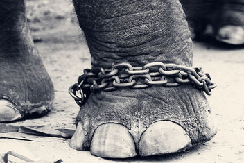 CHAINED!!! - Free image #281325
