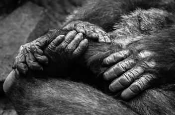 Hands and Feet - Kostenloses image #281415