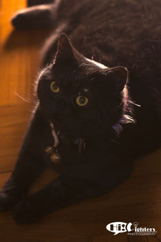 Cutie cat in front of back-lit - Kostenloses image #281435