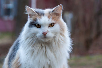 Farm Cat - image #281595 gratis