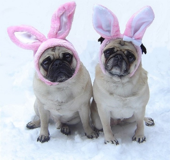 Pug Easter Bunnies - Kostenloses image #281715