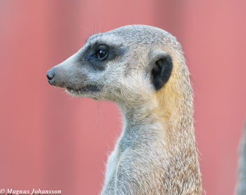 At Parken Zoo - image #283105 gratis