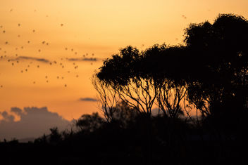 Forster Sunset - Kostenloses image #283495