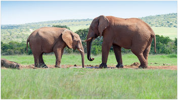 Nature at its best, Addo South Africa - бесплатный image #283945