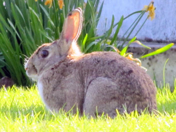 rabbit - Free image #284115