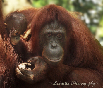 Motherly Love (DSC_0095) - image gratuit #284495