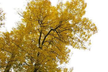 Yellow Tree - image #285015 gratis