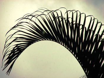 Abstract - Coconut Leaf!!! - Free image #285255