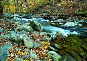 Autumn flowing forest river - Kostenloses image #285595
