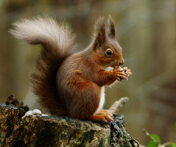 The Squirrel Pose - image gratuit #285745