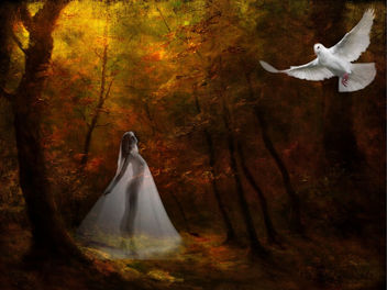 Angelical Forest - image gratuit #285865
