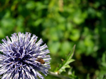 Bug On Round Purple Flower - Free image #286685