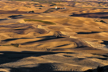 Palouse Wheat ready for harvest - бесплатный image #286995