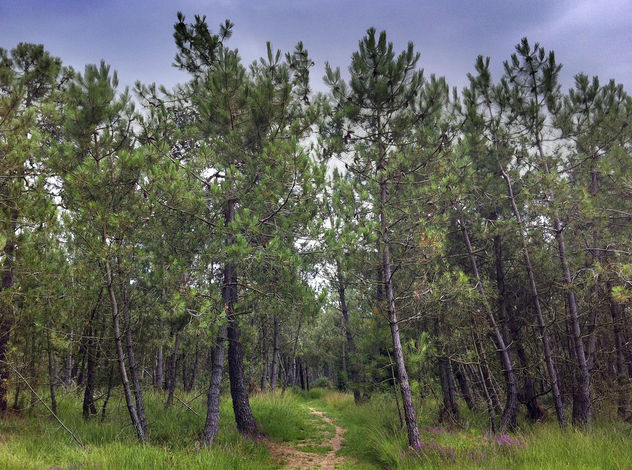 Path In To A French Forest - image gratuit #287005