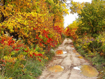 Fall-Dirt-Road - Free image #287025
