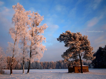 Countryside Winterscape - image gratuit #287325