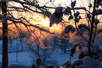 Frosty_morning_Araisi - Free image #287395