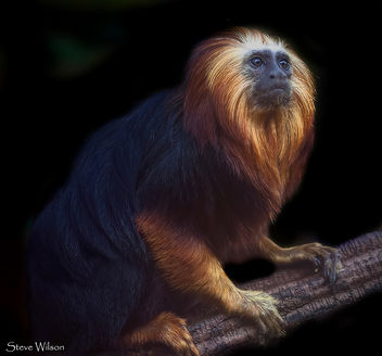 The most beautiful of Primates - бесплатный image #288645