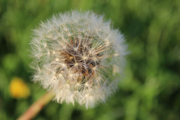 Make a wish :) - Free image #289055