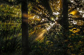 Golden hour in the forest.jpg - image #289075 gratis