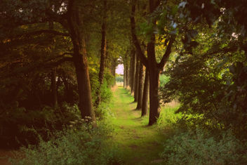 Tree Lane - image gratuit #289135