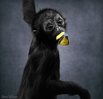 Cute baby Spider Monkey (EXPLORE) - image #289265 gratis