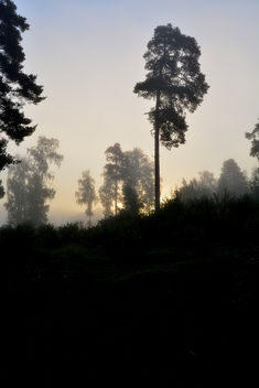 Misty morning - Free image #289535