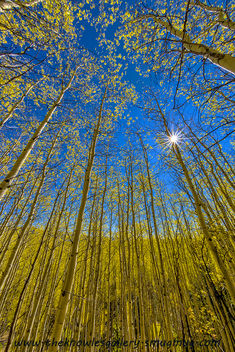 Aspens and sun star - Free image #289545