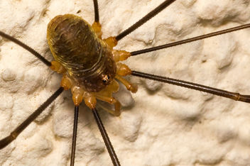 Spider on a wall - image #289935 gratis
