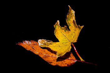 leaves - image gratuit #289985