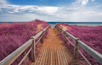Pink Beach Boardwalk - Free image #290045