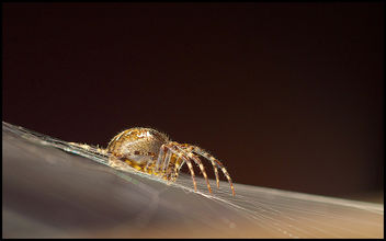 Golden spider - image #290065 gratis